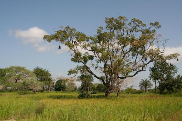 Casamance_landscape